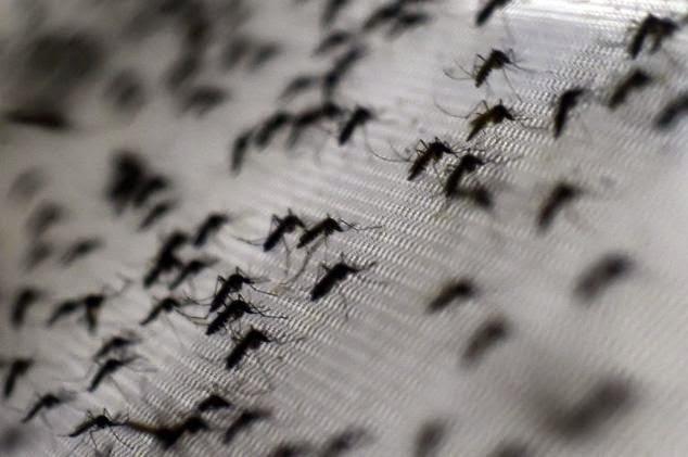 HAIRAN KOT Kenapa Nyamuk Suka Terbang Keliling Kepala Kita