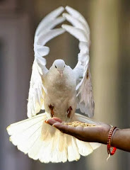 Meditação para encontrar a Paz Interior