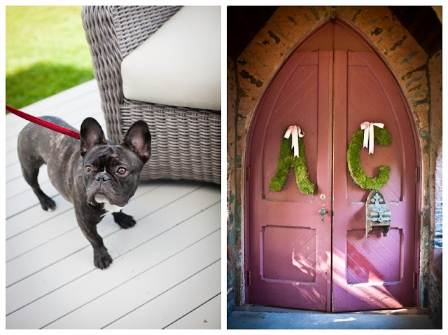 french bulldog at a wedding