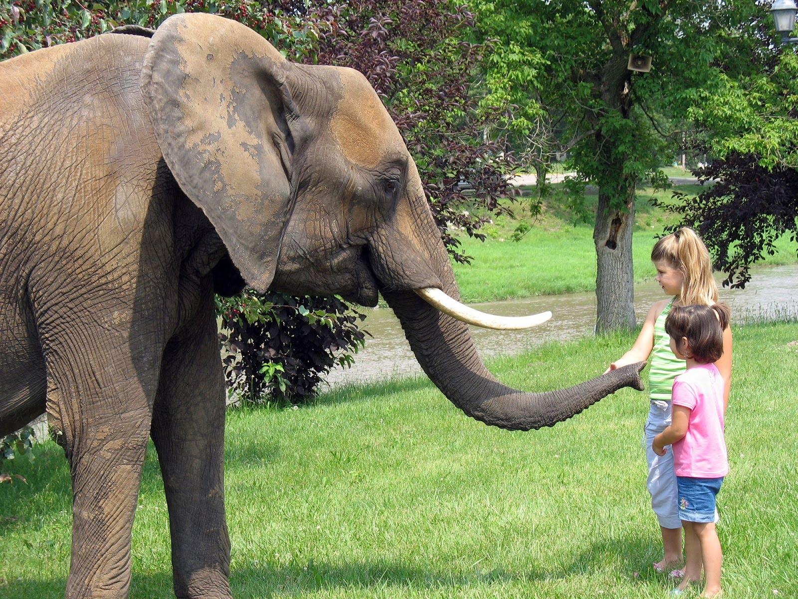 http://1.bp.blogspot.com/-5kjK9w9--mo/Tb2xih17s8I/AAAAAAAAIfc/DPbnzMxB_a4/s1600/elephant-15.jpg