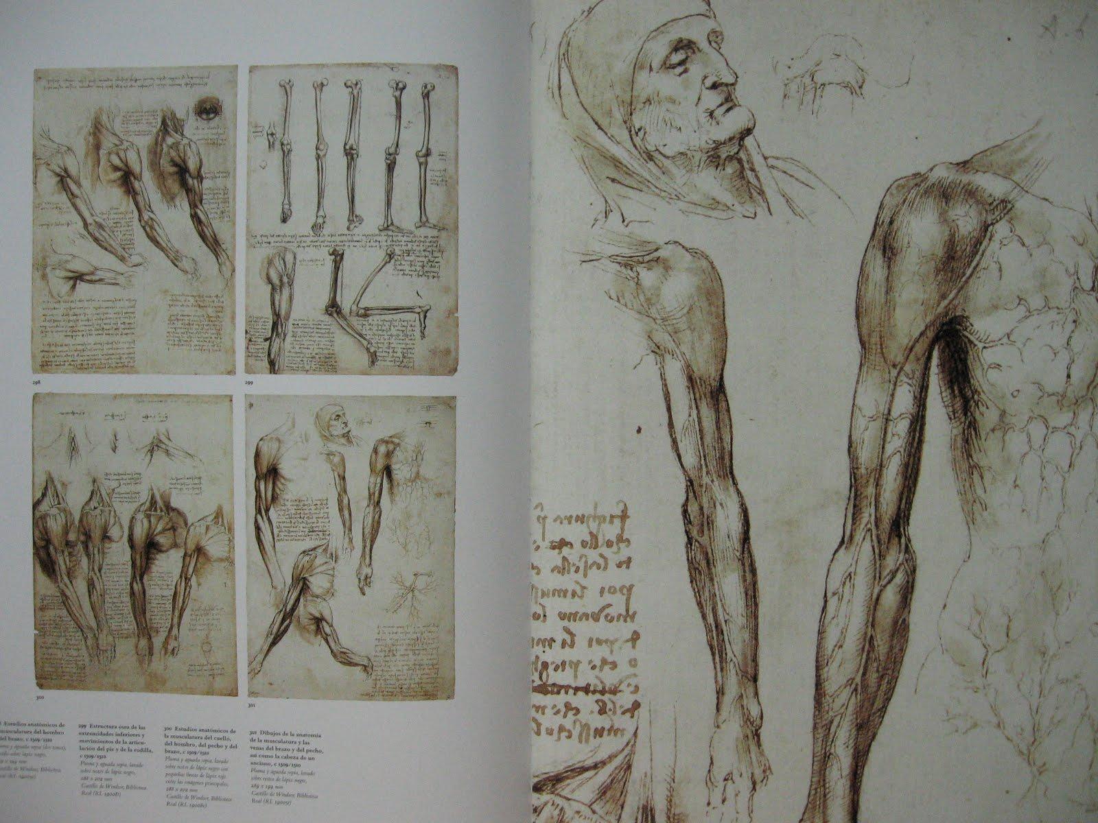 super-arte-diario: LEONARDO DA VINCI: ANATOMIST