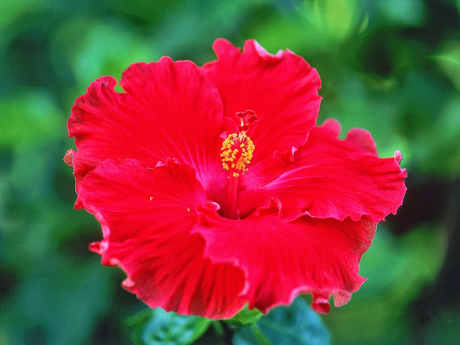 Making sense blossom every pcmb student must have surely dissected this flower in their 12th standard most people who will care to read my blog will have full knowledge of the izmirmasajfo