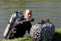 odd jobs: golf ball divers