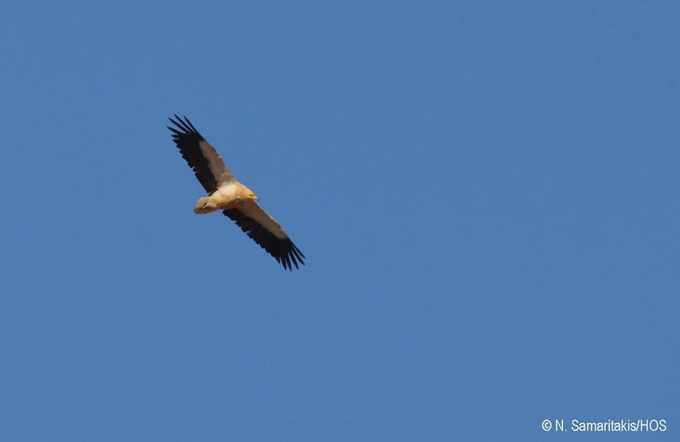 Elliniki Ornithologiki Etaireia