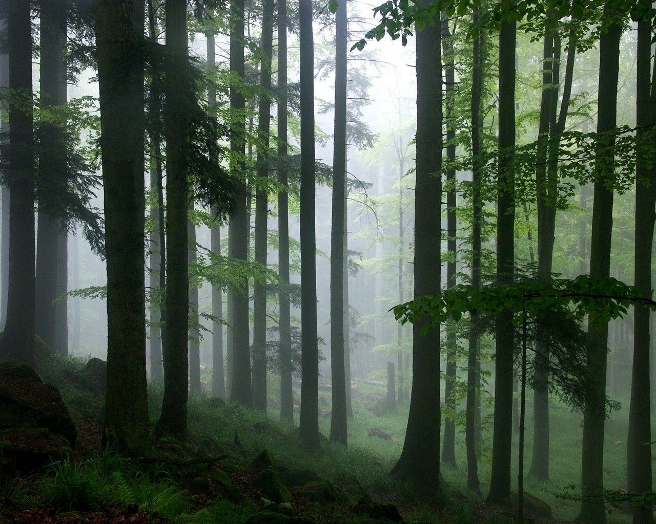 The Rainforest High Definition Desktop Wallpapers | HD ...