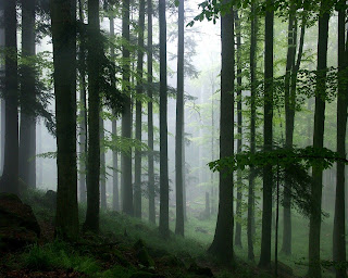 Foggy Rain Forest HD Jungle Wallpaper