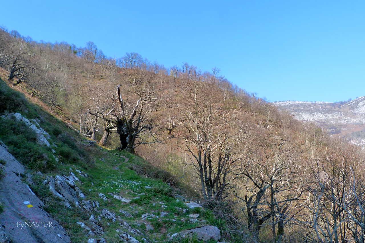 El Robleu - Ruta Sellaño a Semeldón - Ponga - Asturias