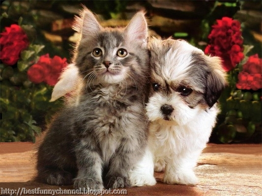 Puppy and kitty.