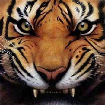 Angry tiger face - photo#4
