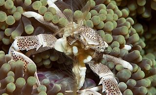 deniz altı canlıları
