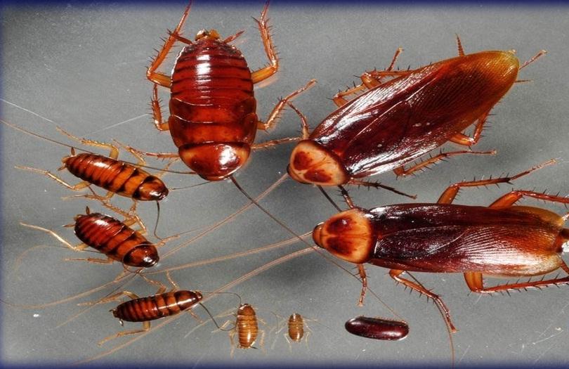 Trucos caseros para eliminar las cucarachas y otros tipos - Eliminar insectos en casa ...