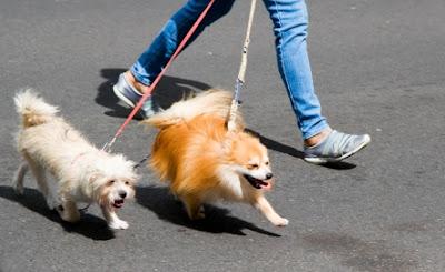 Dắt chó đi dạo ở những nơi đông người