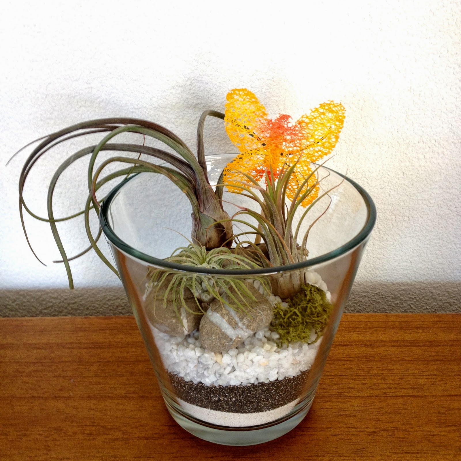 plantes a riennes en bocal glass jar air plants. Black Bedroom Furniture Sets. Home Design Ideas