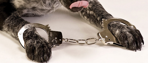 Um cachorro é condenado à prisão perpétua nos EUA.