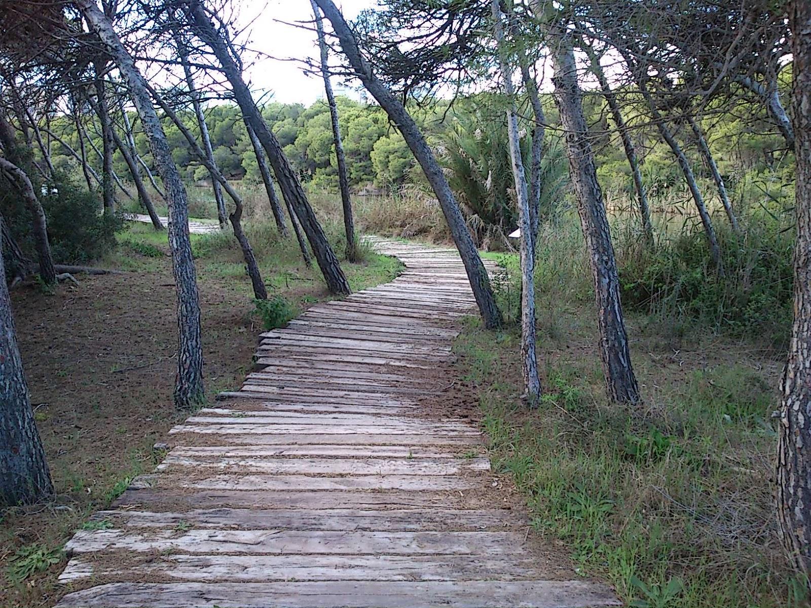 Pedacitos de ysabel el camino de baldosas de madera - Baldosas de madera ...