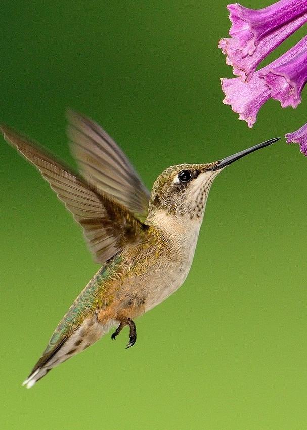 A Home for Hummingbirds