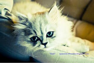Маленький котенок Габи