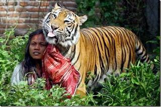 Seorang lelaki dan harimau
