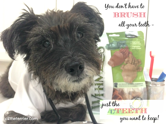Dr Oz the Terrier - You don't have to brush all your teeth, just the teeth you want to keep. Pet Dental Health