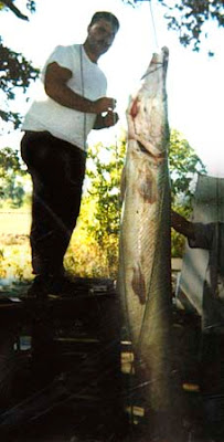 largest alligator gar