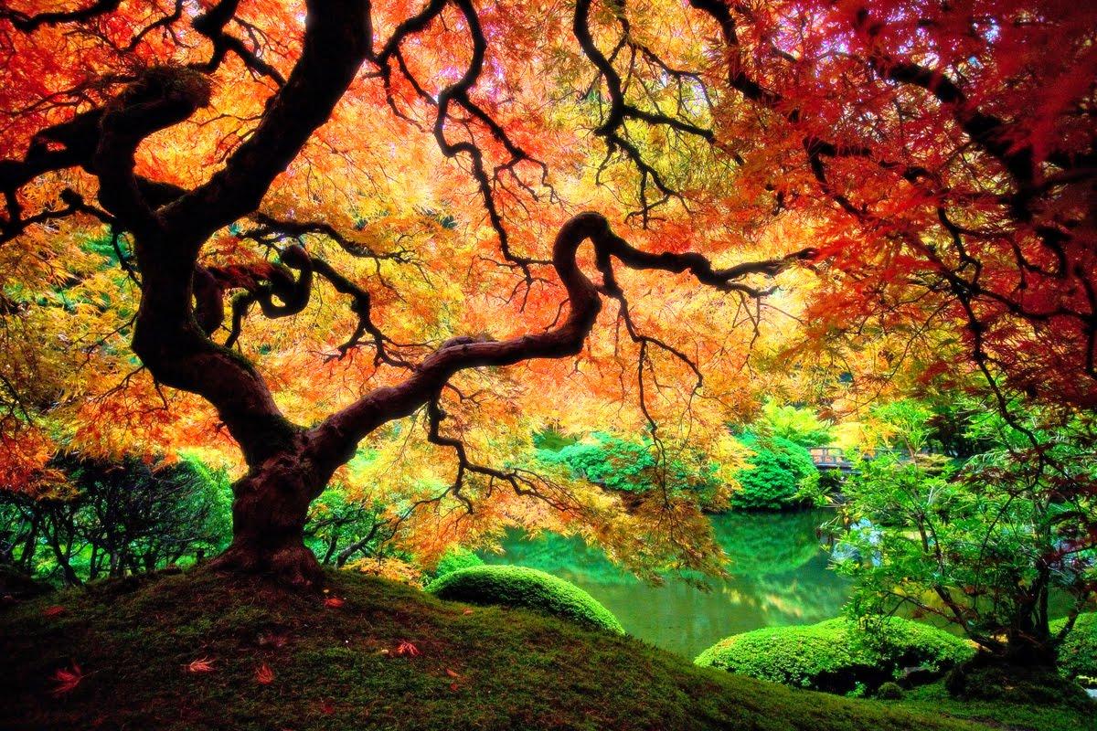 http://1.bp.blogspot.com/-5oy3FGjtTcU/TdbPt2mJULI/AAAAAAAAAno/-XrfOY4vCjo/s1600/This-is-what-trees-look-like-on-acid.jpg
