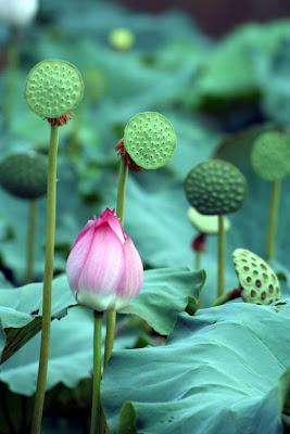 Các loài hoa đẹp 02