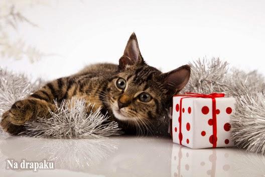 Nie dawaj kota w prezencie!