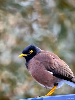 melbourne botanical bird