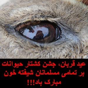 عید قربان عید خون و خونریزی و شکمچرانی از راه رسید!!!