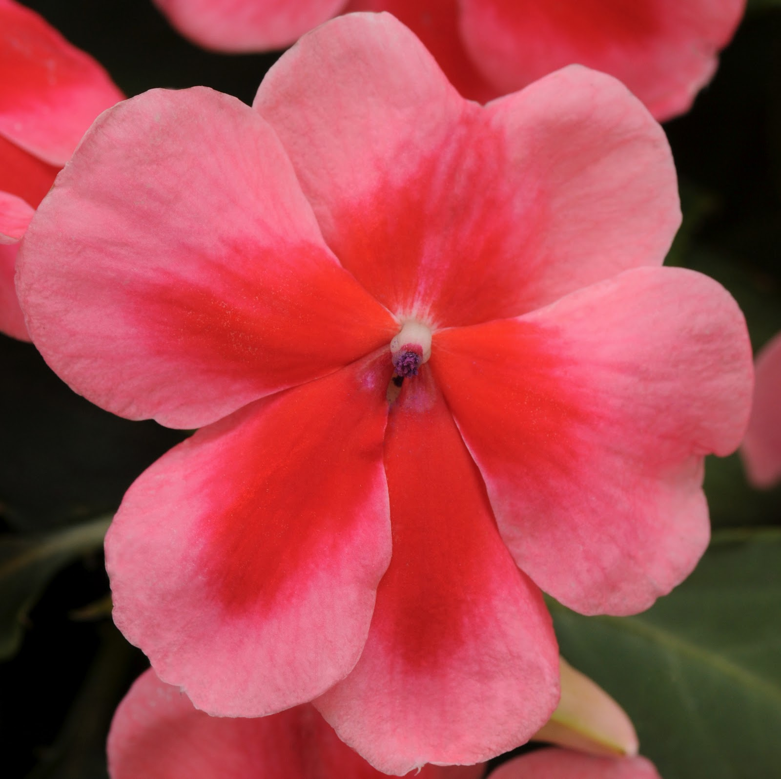 Petal Talk Newest Annuals For Sun And Shade