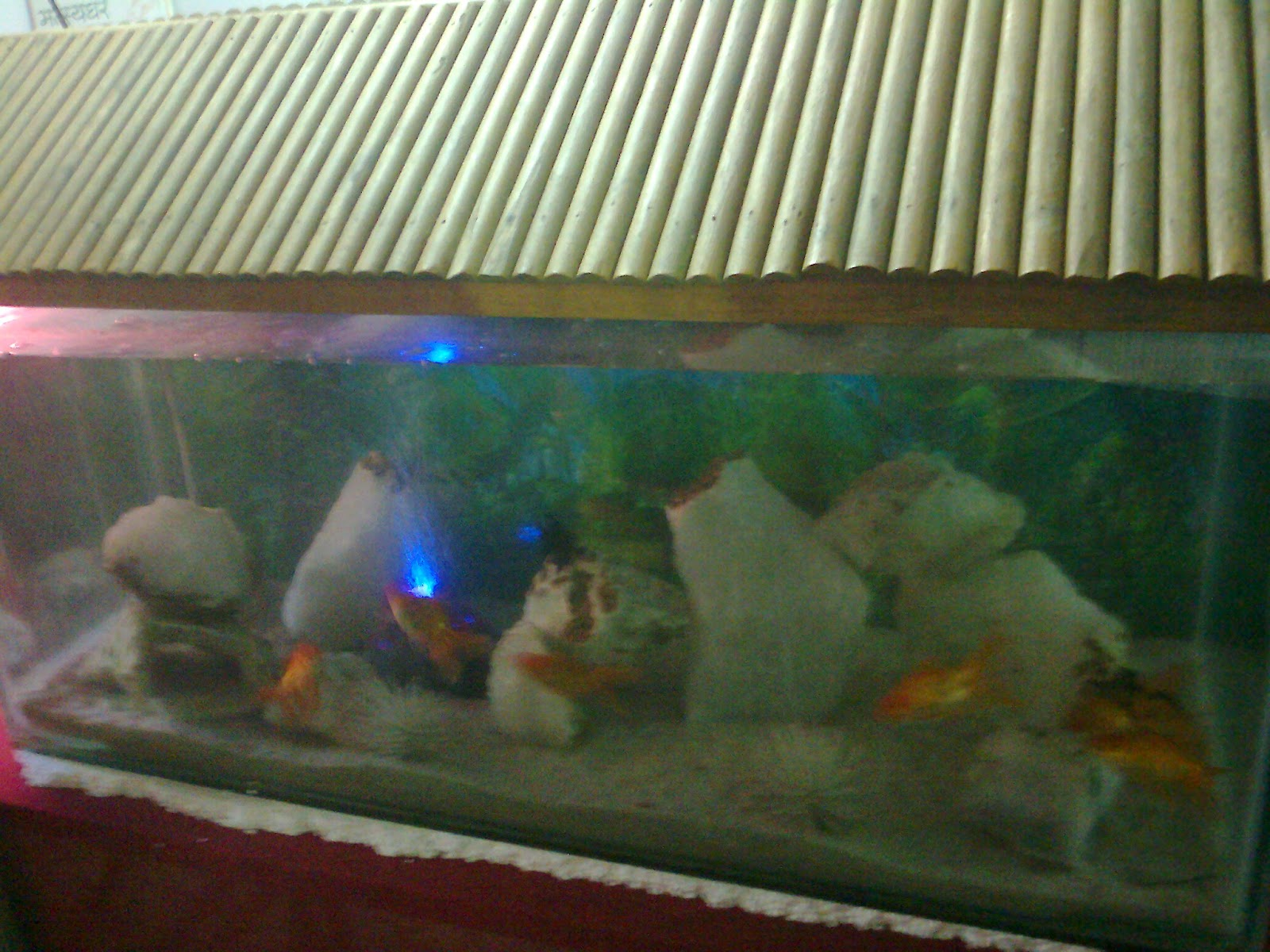 Pet Shop Ahmedabad Colourful Aquarium Fish Exhibition