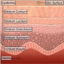 Skin Surface