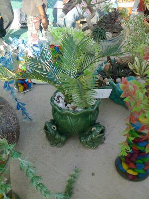Cycus revoluta bonsai