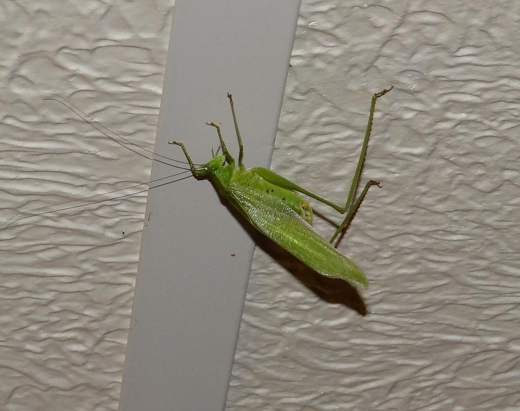 Joyously Prolific: Zette Vs. The Giant Green Grasshopper ...