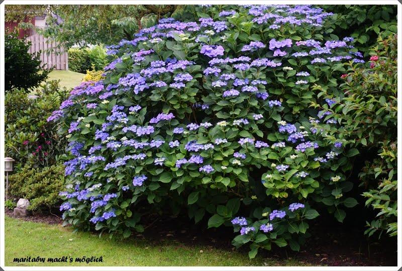 So blüht es in unserem Garten