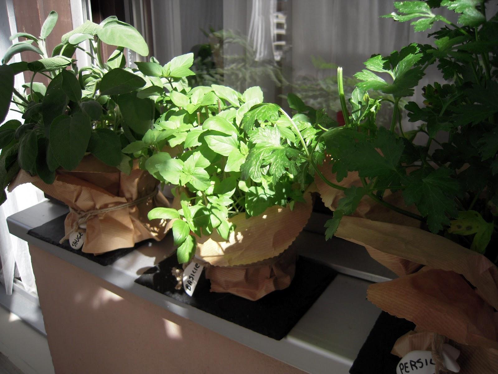 Piccole piante profumate basilico prezzemolo e salvia - Piante profumate ...