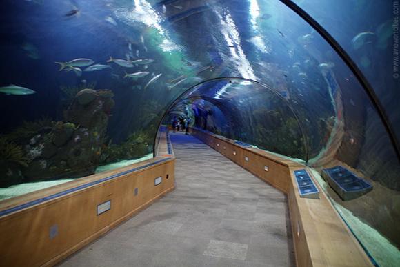 8 de los t neles m s inusuales en el mundo rinc n abstracto Entradas aquarium valencia