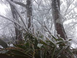 Băng giá bao phủ cây cối ở đỉnh Phia Oắc (huyện Nguyên Bình, Cao Bằng)