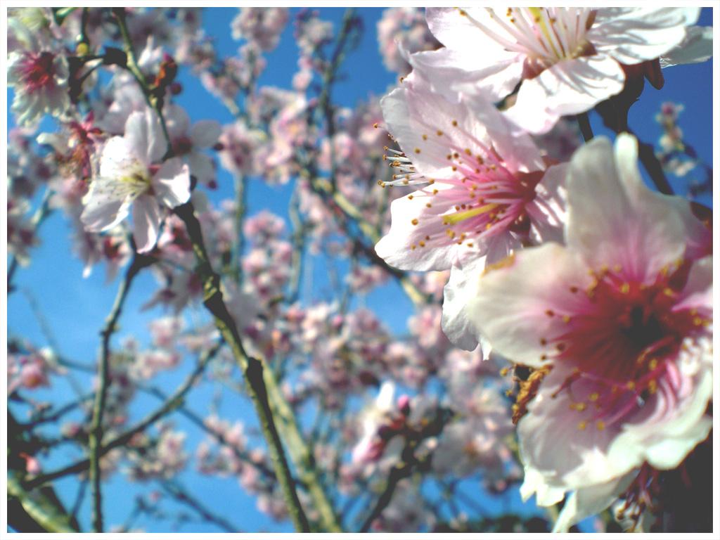 Flowers Lover Blog