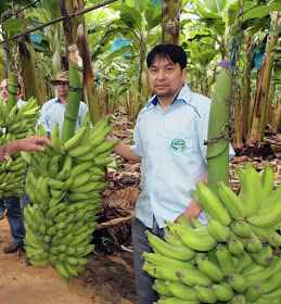 ABAVAR comemora Dia Mundial da Banana