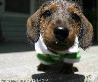 Funny puppy 8