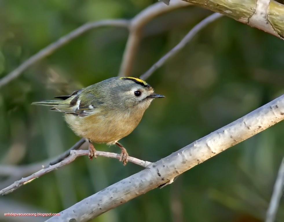 Ảnh thiên nhiên: Chú chim nhỏ 5