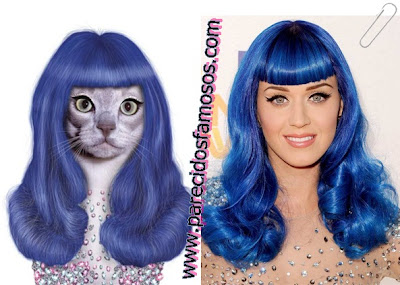 gata con Katy Perry