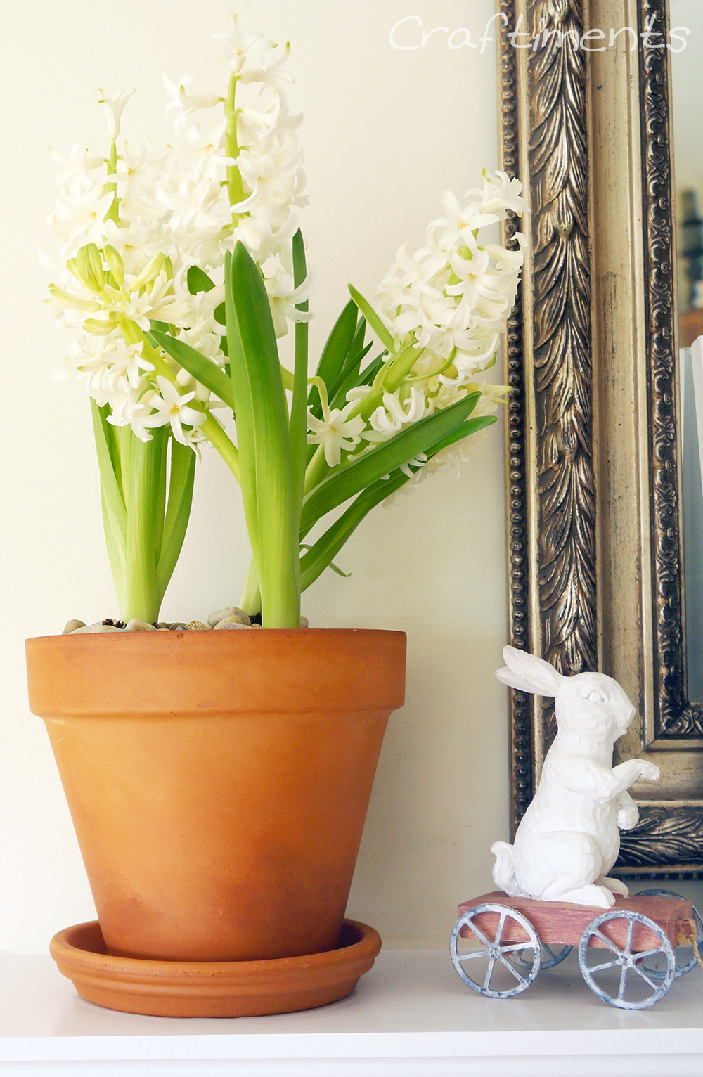 Flowering hyacinths in a terra cotta flowerpot displayed on a mantle