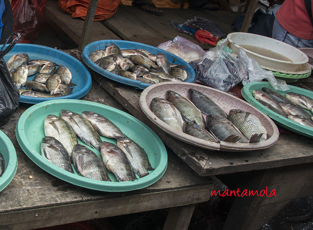 Tomohon market, Minahasa, North Sulawesi.