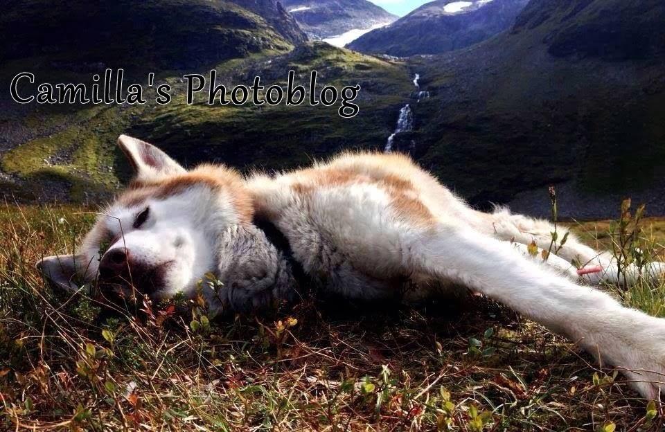 Camilla's photoblog