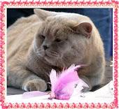 Najlepsze koty na świecie :)
