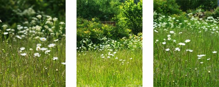 Engområder i haven. Skab afslappet sommerstemning i haven med med vilde blomster og uslået græs.