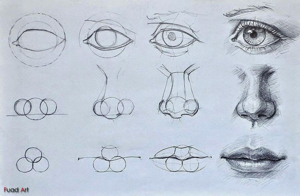 Eyes noses mouths facial features