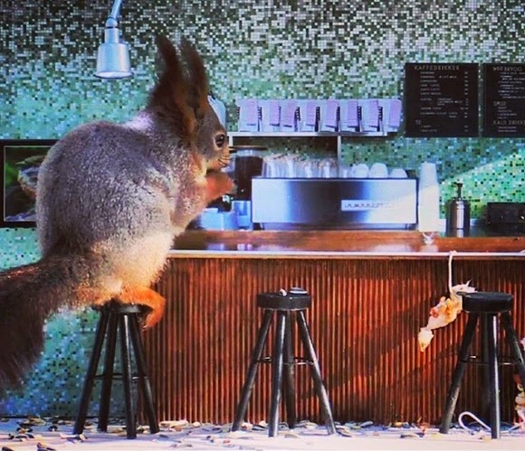Coffee shop for a little woodsman! ! Small animals who gather in a small coffee shop that has been installed in the forest!